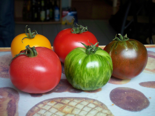 Meet the tomatoes!